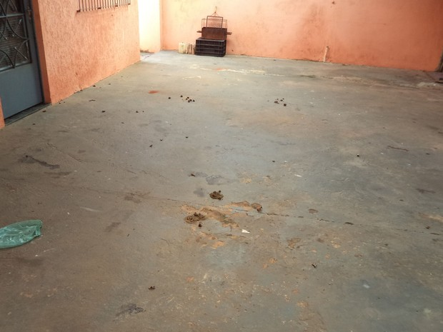Animais estavam em um local sem condições de higiene (Foto: Divulgação/ Polícia Ambiental)