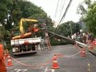 Semma informa que árvore caiu nesta sexta por falta de poda