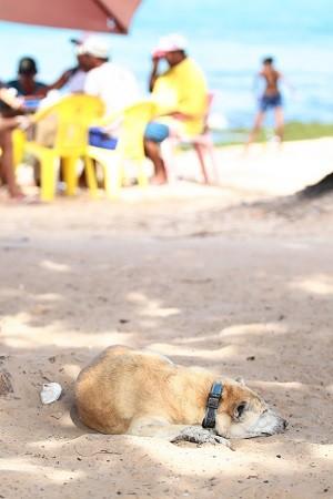 Mesmo de colera, cão vive nas ruas e adora tirar um cochilo na praia da Ponta Verde. (Foto: Jonathan Lins/G1)