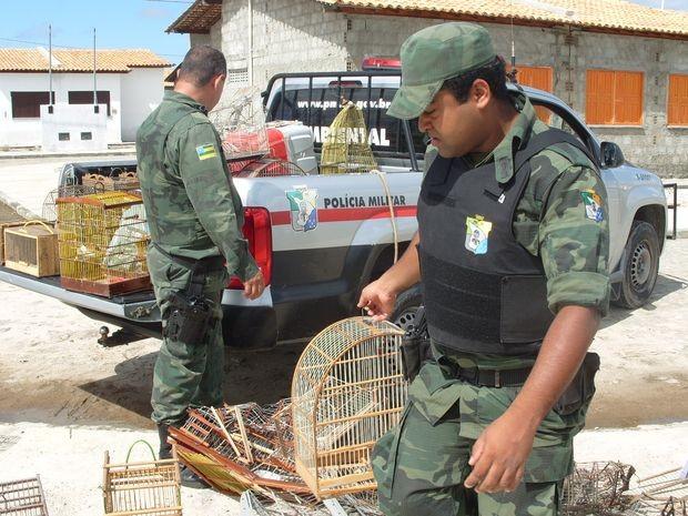 Aves seriam comercializadas ilegalmente em Sergipe (Foto: Divulgação/Pelotão Ambiental)