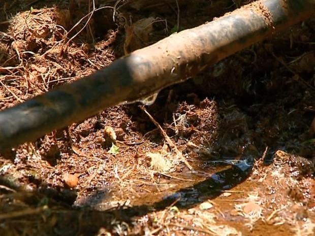 Irrigação melhora a produtividade da safra de laranja em São Carlos (Foto: Ely Venâncio / EPTV)