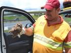 Filhote de coruja machucado é resgatado em rodovia de Jundiaí