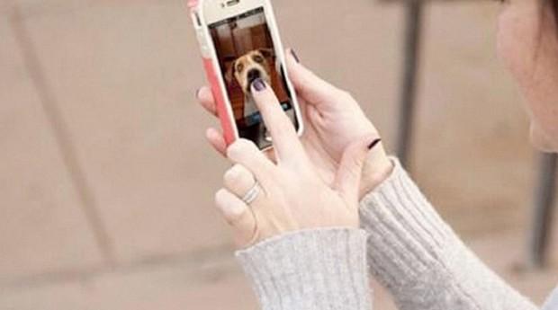 O sistema é integrado a smartphones e computadores dos donos (Foto: Divulgação)