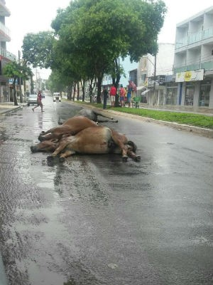 Cavalos foram morto em Teixeira de Freitas (Foto: Rafael Vedra/Site Liberdade News)