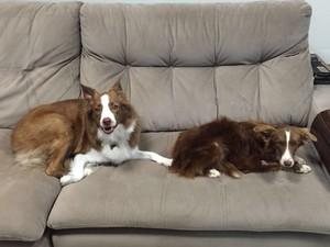 Lana e sua 'irmã' Chiara tomaram conta do sofá da família Parra (Foto: Bruna Parra/Arquivo pessoal)