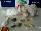 Suspeito é preso com drogas dentro de cachorro de pelúcia no AM, diz PM