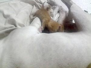 Mala adotou gatinhos como se fosse seus filhotes (Foto: Andrei Chaves/arquivo pessoal)