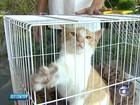Hospital Veterinário da UFMG promove feira de adoção de animais