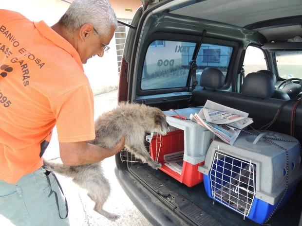 A cadela Pandora fez sua primeira viagem de Táxi Dog. O serviço facilita a vida de quem precisa levar seu cão para o veterinário ou para tomar banho . (Foto: Pedro Carlos Leite/TV Diário)