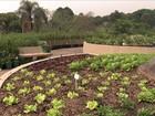 Cultivo de horta em espaços urbanos atrai cada vez mais adeptos