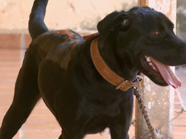 Cachorra Aisha foi atacada quando a dona viajava em Aguaí (Foto: Eder Ribeiro/ EPTV)
