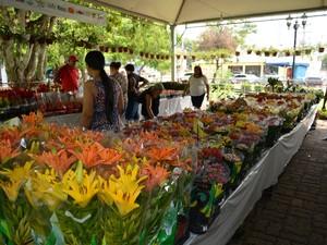 Festval de flores ficará aberto até o próximo domingo, 6, na praça Três Caixas d'Água, em Porto Velho (Foto: Mary Porfiro/G1)