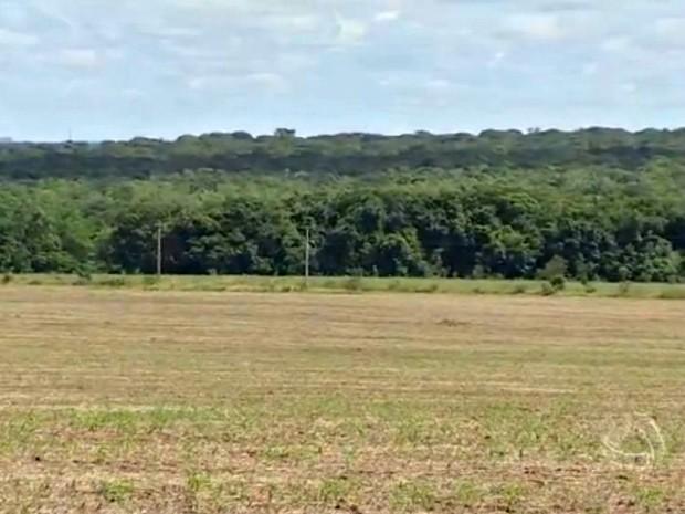 Fazenda em Mato Grosso do Sul (Foto: Reprodução/TV Morena)