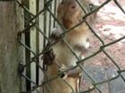 Animais resgatados são devolvidos à natureza pela Polícia Ambiental de RO