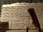 Criadores do NE continuam sofrendo com a falta de milho para os animais