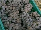 Preço pago pela uva preocupa produtores da Serra Gaúcha