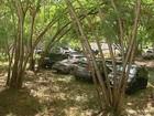 Gaeco pede leilão de bens dos réus da Sevandija antes de julgamento em SP