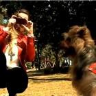 Aplicativo marca encontro entre cachorros (Reprodução/RBS TV)
