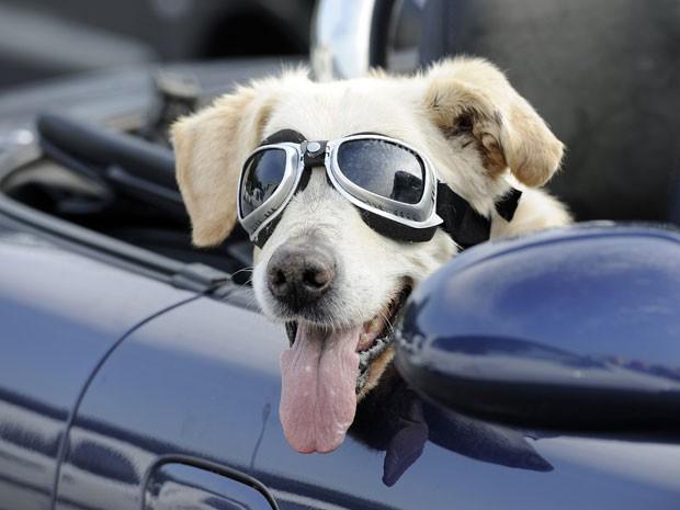 O cão Mo é visto de óculos de piloto em estacionamento de supermercado na cidade alema de Gelsenkirchen, em 23 de agosto de 2011 (Foto: AP)