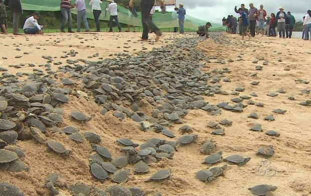 Tartarugas são soltas no Vale do Guaporé (Foto: Reprodução/TV Rondônia)