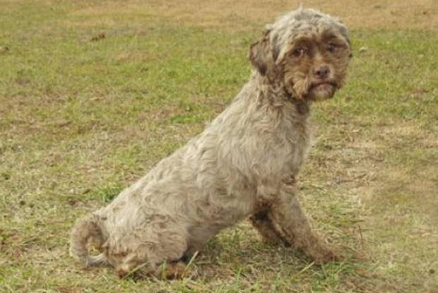 Cachorro foi colocado para adoção no estado de Indiana (Foto: Divulgação)