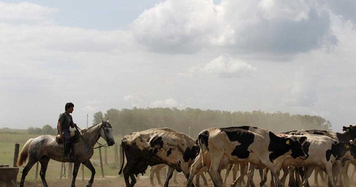 Argentinos transformam gases da digestão de bovinos em energia