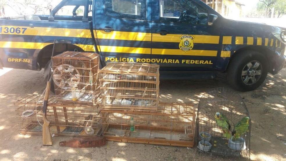 PRF apreendeu oito animais silvestres na casa de um fazendeiro em Patos. (Foto: Divulgação/PRF)