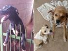 Feira promove adoção de cães e gatos abandonados, em Goiânia
