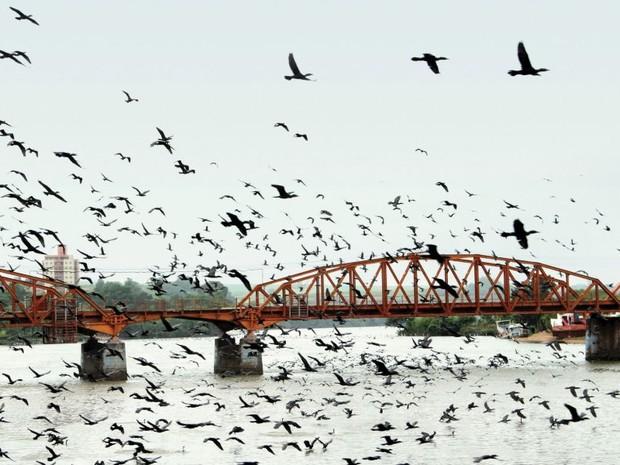 Pássaros sobrevoam a Ponte Campos Salles em Barra Bonita (Foto: Wellinton Fernando de Oliveira/ Concurso Ponte Campos Salles )