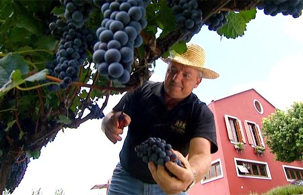 Os vinhedos da Serra Gaíhc são um dos melhores destinos do mundo no enoturismo (Foto: Reprodução EPTV)
