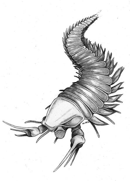 Ancestral milenar da lagosta e do escorpião, que vivia em águas rasas na região da atual Colúmbia Britânica, no Canadá, foi batizado de 'Kooteninchela deppi' (Foto: Divulgação/Imperial College London)