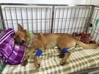 Cachorro é esfaqueado por homem no litoral de SP; autor foi agredido