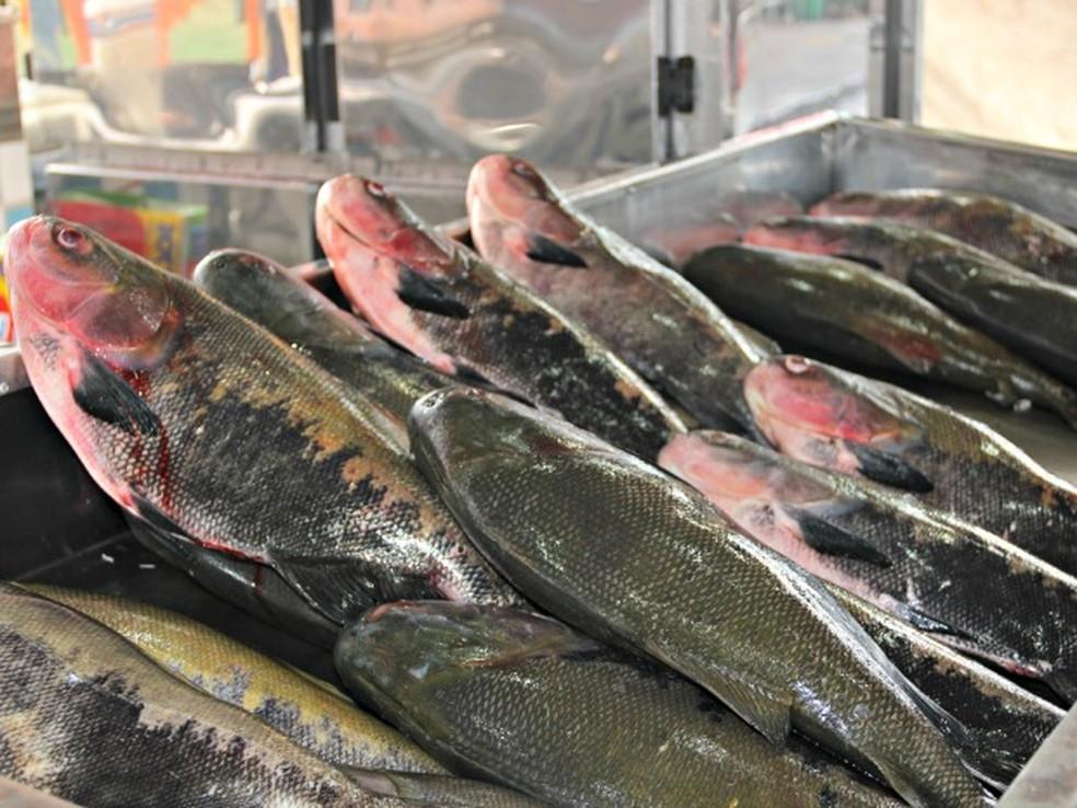 Quilo de peixe tambaqui é custa R$ 5,00 em Cacoal segundo pesquisa da Emater-RO (Foto: Suelen Gonçalves/G1 AM)