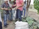 Governo da Paraíba distribui palma resistente na região de Juazeirinho