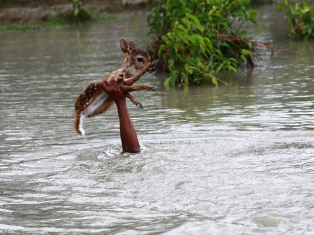Garoto atravessa cervo por águas agitadas, ficando com a cabeça encoberta (Fot Caters News/The Grosby Group)
