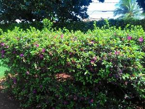 Época também é conhecida como a estação das flores (Foto: Lais Vieira/G1)