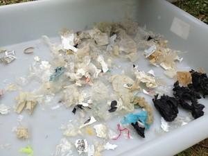 Lixo encontrado no estômago de tartarugas no litoral gaúcho. Projeto Nossa Terra (Foto: Roberta Salinet/RBS TV)