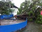 Ventos de 40 km/h provocam quedas de árvores em Santos e Guarujá, SP