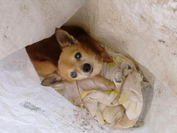 Cadelinha foi encontrada dentro de um saco plástico em Bebedouro (Foto: Amilcar Narente/Arquivo Pessoal)