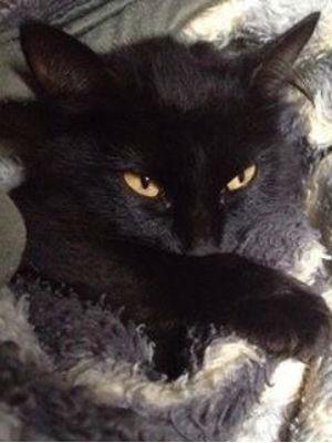 Enfeites pendurados são um convite para os gatos da Luiza Steinert pularem (Foto: Arquivo pessoal)