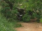 Jovem morre após bater moto contra árvore caída há 15 dias em estrada