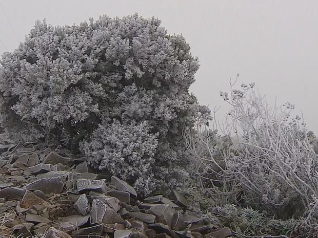 Geada cobriu vegetação de Urupema nesta sexta (29) (Foto: Reprodução/RBS TV)