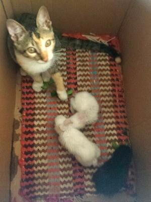 Gatinha 'Preciosa' e os filhotes de coelho são inseparáveis, disse a dona (Foto: Anne Caroline da Costa/Arquivo pessoal)