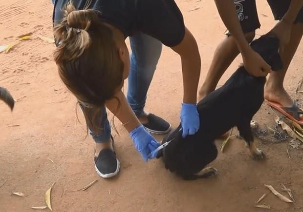 amapá; oiapoque; cães; cinomose; (Foto: Reprodução/Rede Amazônica)