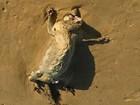 Holandesa encontra carcaça de criatura estranha em praia australiana