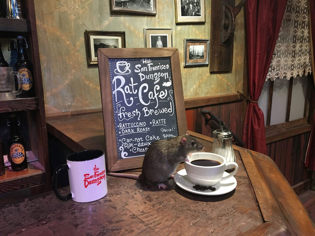Califórnia terá café para quem quiser interagir com ratos (Foto: San Francisco Dungeon/Facebook)