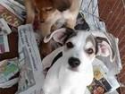 ONG e Ribeirão Shopping realizam feira de adoção de pets neste sábado