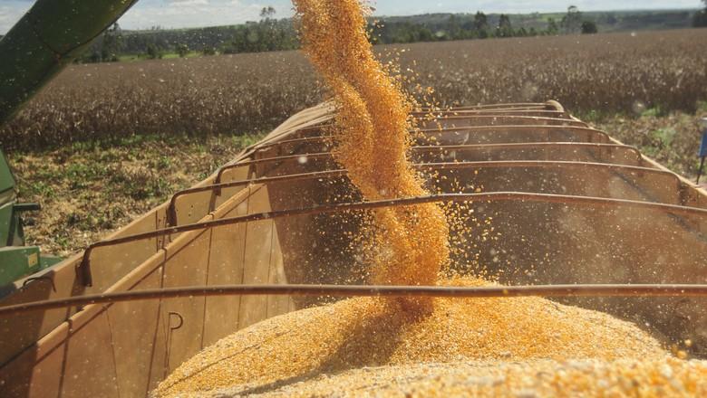 agricultura-milho-colheita (Foto: Ernesto de Souza/Ed. Globo)