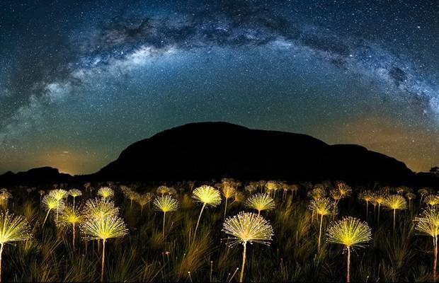 Marcio Cabral clicou com uma paisagem impressionante de flores que brilham como estrelas no Cerrado brasileiro (Foto: Marcelo Cabral. 2015 Sony World Photography Awards )