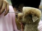 Pet shop cobra R$ 120 por corte para cães no estilo 'flat-top' em Taiwan